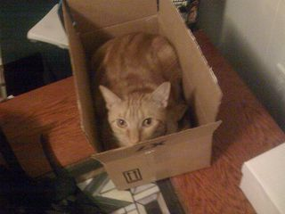 The Return of Box Cat